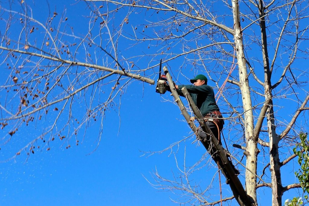 Contact Us-Golden Glades FL Tree Trimming and Stump Grinding Services-We Offer Tree Trimming Services, Tree Removal, Tree Pruning, Tree Cutting, Residential and Commercial Tree Trimming Services, Storm Damage, Emergency Tree Removal, Land Clearing, Tree Companies, Tree Care Service, Stump Grinding, and we're the Best Tree Trimming Company Near You Guaranteed!