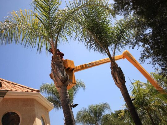 Palm Tree Trimming-Golden Glades FL Tree Trimming and Stump Grinding Services-We Offer Tree Trimming Services, Tree Removal, Tree Pruning, Tree Cutting, Residential and Commercial Tree Trimming Services, Storm Damage, Emergency Tree Removal, Land Clearing, Tree Companies, Tree Care Service, Stump Grinding, and we're the Best Tree Trimming Company Near You Guaranteed!