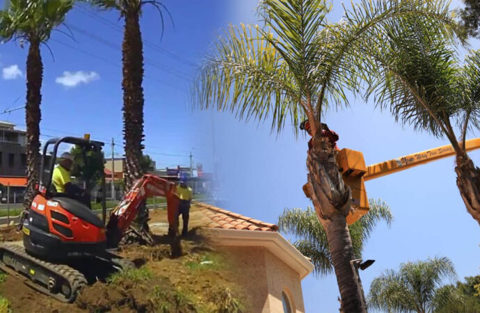 Palm tree trimming & palm tree removal-Golden Glades FL Tree Trimming and Stump Grinding Services-We Offer Tree Trimming Services, Tree Removal, Tree Pruning, Tree Cutting, Residential and Commercial Tree Trimming Services, Storm Damage, Emergency Tree Removal, Land Clearing, Tree Companies, Tree Care Service, Stump Grinding, and we're the Best Tree Trimming Company Near You Guaranteed!