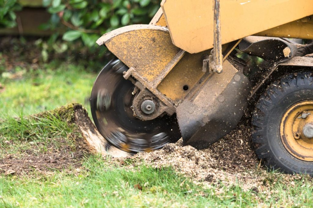 Stump Grinding-Golden Glades FL Tree Trimming and Stump Grinding Services-We Offer Tree Trimming Services, Tree Removal, Tree Pruning, Tree Cutting, Residential and Commercial Tree Trimming Services, Storm Damage, Emergency Tree Removal, Land Clearing, Tree Companies, Tree Care Service, Stump Grinding, and we're the Best Tree Trimming Company Near You Guaranteed!