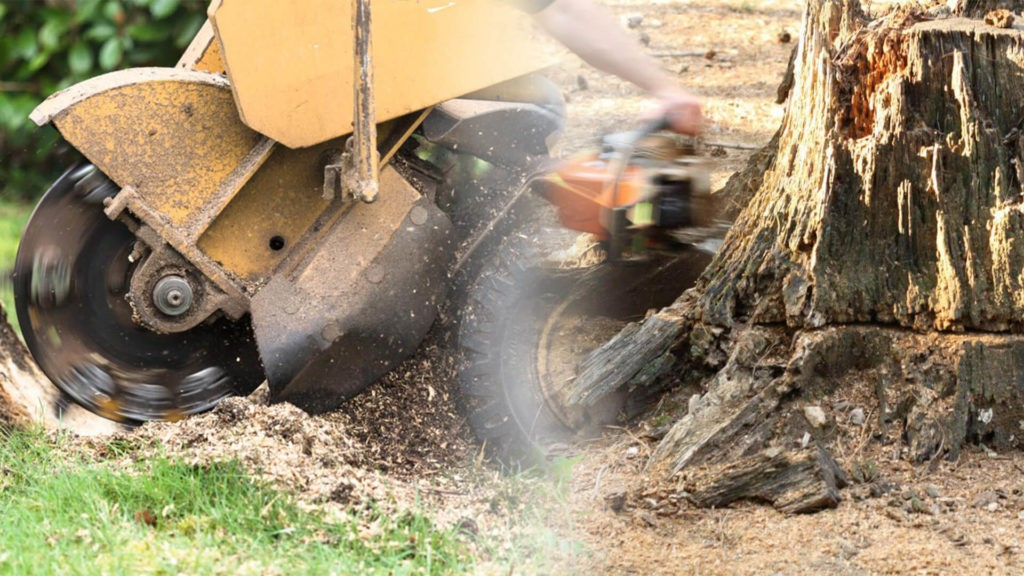 Stump grinding & removal-Golden Glades FL Tree Trimming and Stump Grinding Services-We Offer Tree Trimming Services, Tree Removal, Tree Pruning, Tree Cutting, Residential and Commercial Tree Trimming Services, Storm Damage, Emergency Tree Removal, Land Clearing, Tree Companies, Tree Care Service, Stump Grinding, and we're the Best Tree Trimming Company Near You Guaranteed!