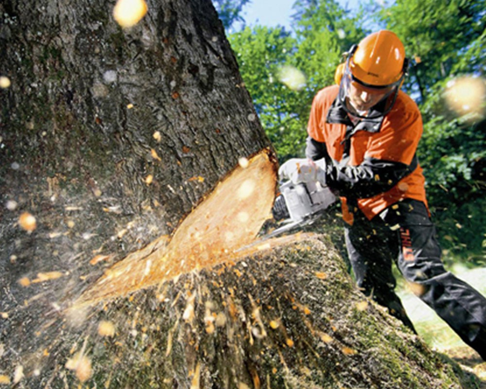 Tree Cutting-Golden Glades FL Tree Trimming and Stump Grinding Services-We Offer Tree Trimming Services, Tree Removal, Tree Pruning, Tree Cutting, Residential and Commercial Tree Trimming Services, Storm Damage, Emergency Tree Removal, Land Clearing, Tree Companies, Tree Care Service, Stump Grinding, and we're the Best Tree Trimming Company Near You Guaranteed!
