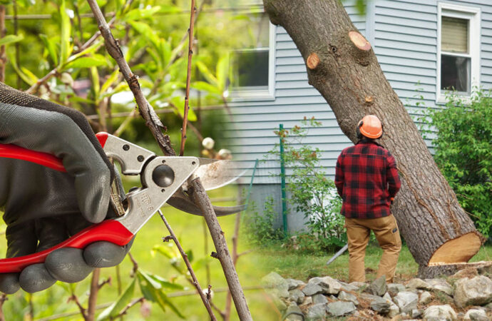 Tree pruning & tree removal-Golden Glades FL Tree Trimming and Stump Grinding Services-We Offer Tree Trimming Services, Tree Removal, Tree Pruning, Tree Cutting, Residential and Commercial Tree Trimming Services, Storm Damage, Emergency Tree Removal, Land Clearing, Tree Companies, Tree Care Service, Stump Grinding, and we're the Best Tree Trimming Company Near You Guaranteed!